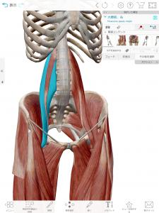 ママヨガ 腸腰筋にアプローチ